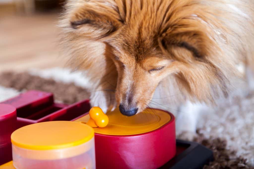 shetland sheepdog with interactive dog toy treats for leaving dog home alone keep them occupied
