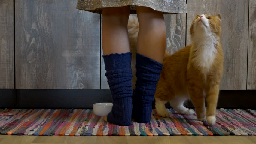 orange cat on rug in front of cupboards looking up at human wearing skirt and socks