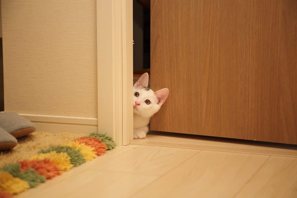 cat peeking into bathroom cracked door persons feet on rug