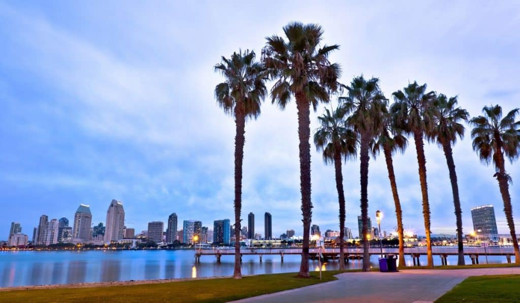 San Diego waterfront with palm trees